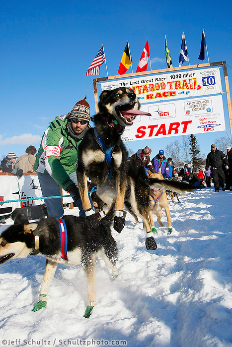 Sunday  March 7 , 2010    A Celeste Davis dog jumps in anticipation of leaving the re- start of the 2010 Iditarod in Willow , Alaska