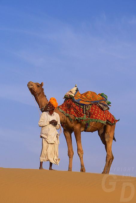 Camels and tribal people in the Thar Desert Rajasthan, India
