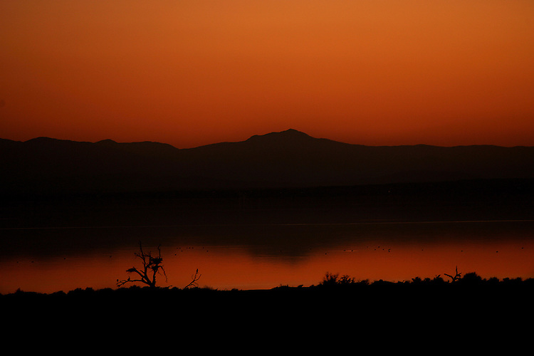 A tree with several birds is silhouetted against the Salton Sea, 14 miles south of North Shore on the east side of California's largest lake on March 14, 2007. Photo by Rodrigo Pena.