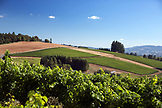 USA, Oregon, Willamette Valley, view from the top of White Rose Estate Vineyard, Dayton