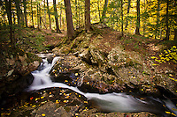 Fall color along Big Pup Creek in Marquette County Michigan's Upper Peninsula.