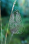 Dew on a spider web along US-31 in Berrien County August 5 2003