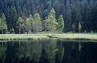 Karsee, Ellbachsee, Schwarzwald, Deutschland