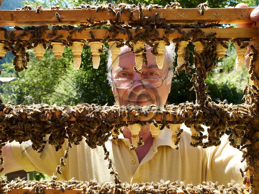 In Switzerland, a beekeeper inspects his queen bee farm. The queens are raised by the beekeepers to repopulate their hives and increase their stock.///En Suisse un apiculteur inspecte son élevage de reines. Les reines sont élevées par les apiculteurs pour repeupler leurs ruches et accroitre leur cheptel.