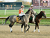 Win Willy before winning The Brandywine Stakes at Delaware Park on 10/30/10