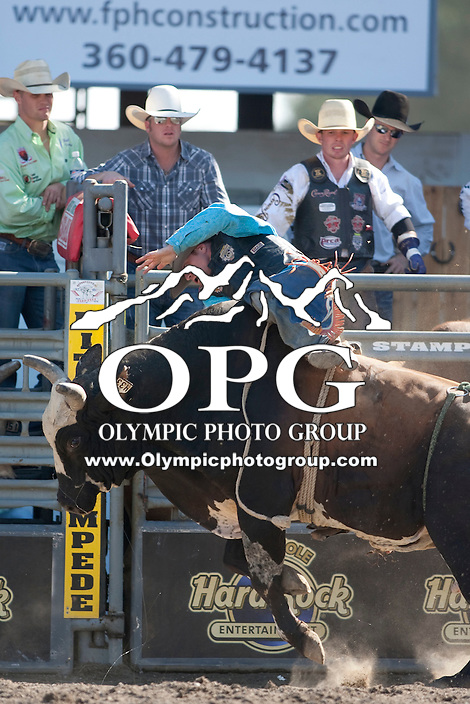 28 Aug 2011:  Shane Proctor was not able to score while riding the bull Bible Bender in the Seminole Hard Rock Extreme Bulls competition  held at the Kitsap County Fair and Stampede Rodeo in Bremerton, Washington.