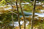 Ohanapecosh River, Mount Rainier National Park, Washington