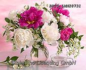 Alfredo, FLOWERS, BLUMEN, FLORES, photos+++++,BRTOLMN28731,#f#, EVERYDAY