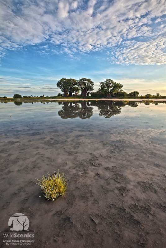 'Reflections of Baines'.<br />