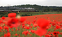 12/06/2012 ..A steam train on the Severn Valley Railway passes acres of poppies in fields near Bewdley in Worcestershire. .All Rights Reserved - F Stop Press.  www.fstoppress.com. Tel: +44 (0)1335 300098.Copyrighted Image. Fees charged will reflect previously agreed terms or space rates for individual publications, states or country.