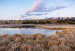 Yellowstone National Park, WY: Colorful sunrise on frosted grasses on Swan Lake Flats in Gardners Hole