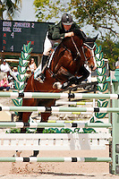 Jonkheer Z ridden by Karl Cook,  USEF trials#2 Wellington Florida. 3-22-2012
