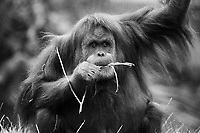 Orangutan-Film, San Diego Zoo