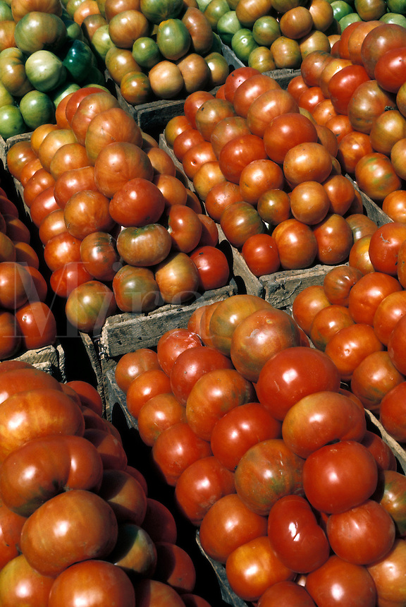 Tomato harvest near Trujillo, northern Peru