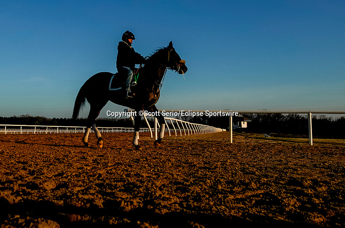 March 18, 2020 : A horse comes of the training track as life goes on at Fair Hill Training Center in Fair Hill, Maryland. While no spectators are allowed at any race facility in the United States, or the world essentially, during the coronavirus pandemic, the horses still need to train and exercise. The Fair Hill Trainer Center in Cecil County in Maryland is still open for business and the equine athletes remain active through the COVID-19 crisis. Scott Serio/Eclipse Sportswire/CSM