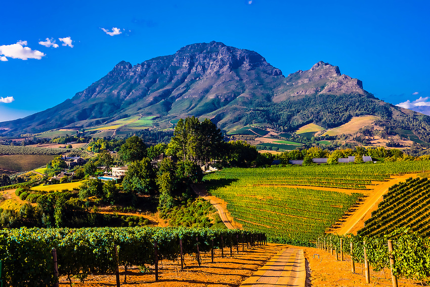 Vineyards, Delaire Graff Estate, Helshoogte Pass, Cape Winelands near Stellenbosch, South Africa.