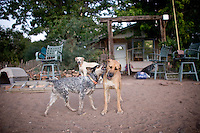 Maryann Pratt's dogs play outside her ranch house. (Pat Shannahan/ The Arizona Republic)