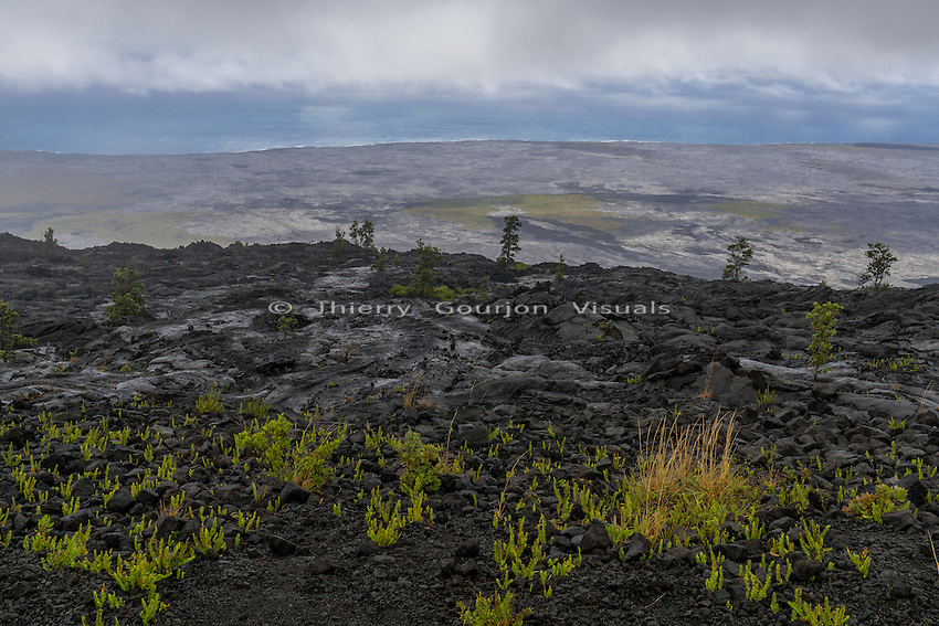 Chain of Craters Road, Big Island, Hawaii. Dec. 2015. Photo by Thierry Gourjon.