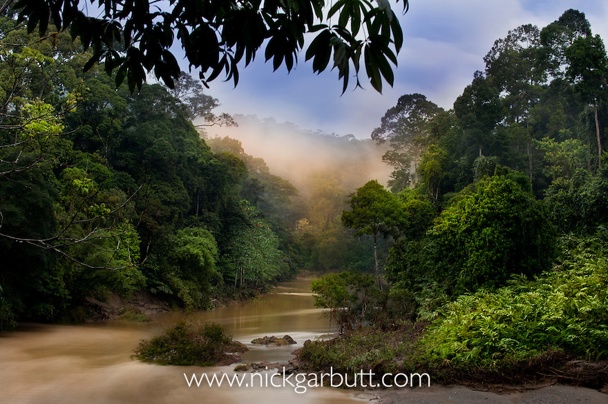 Dawn / sunrise over the Segama River, with mist hanging over lowland Dipterocarp rainforest. Heart of Danum Valley, Sabah, Borneo.
