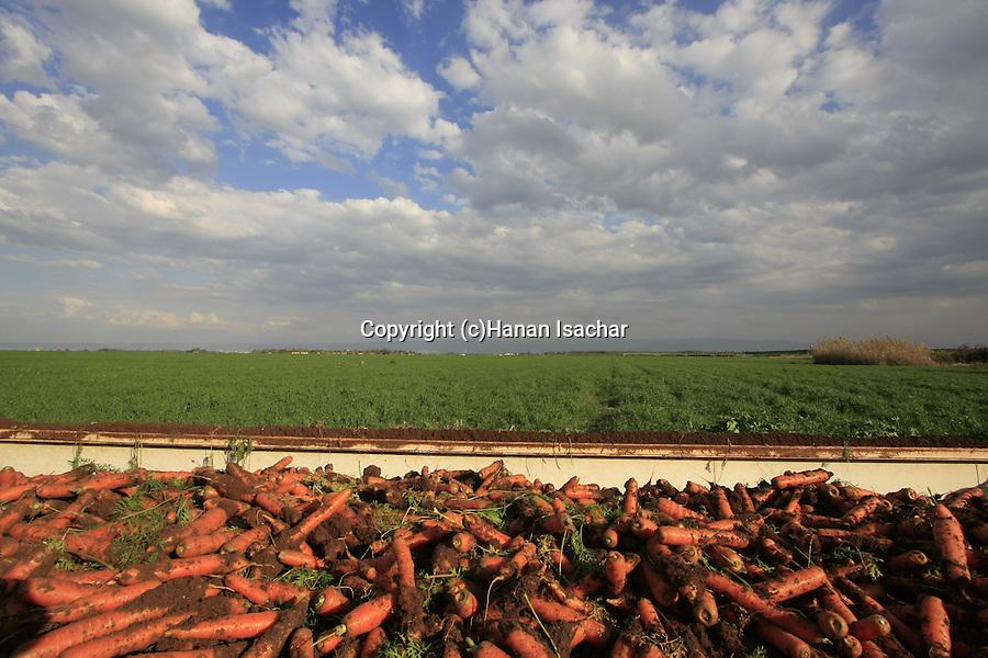Israel, Beth Shean valley. Fields by Ein Moda