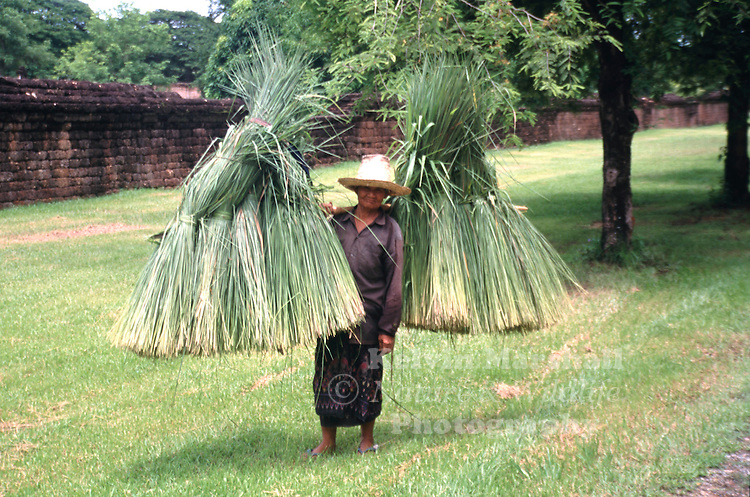 Elderly Thai lady carrying her freshy cut crops from the grounds within the Sukhothai Historical Park. Sukhothai - Thailand.