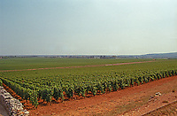 A vineyard in Puligny Montrachet, partially being replanted, Bourgogne