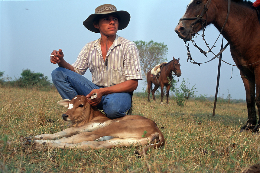 Luiz Otavo Gomes Pereira, 19, captures a calf for inocculation on the Fazenda Rio Negro in Brazil's giant Pantanal Mato Grossense wetland. The pantanal, covering an area half the size of France, supports one of the most intact arrays of wildlife in the world, despite 200 years of cattle ranching. Subdivision of properties in the region weaken the economic viability of the traditional ranches.