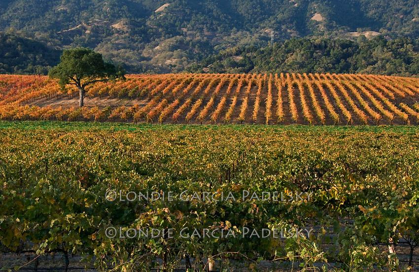 Vineyard at Santa Margarita, California