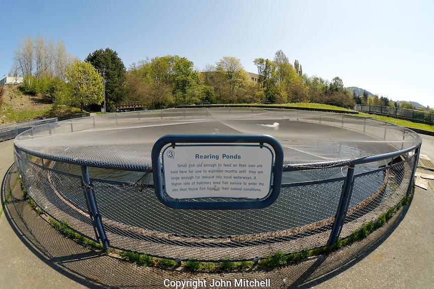 Salmon rearing pond, Maritime Heritage Fish Hatchery and center, Bellingham, Washington state, USA