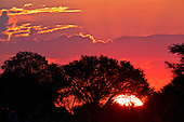 Silhoutettes in Hwange national park against the most spectacular sunsets, with deep colour.