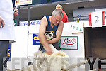 Patrick Moran from Waterville giving it his best at the All Ireland sheep shearing championships last weekend.