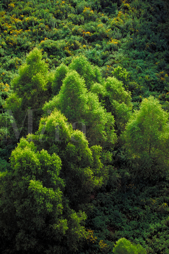 aerial view of forest