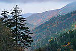 Pine Trees And Plunging Mountain Ridges Near Clingman's Dome In The Great Smoky Mountains National Park, Tennessee, North Carolina, USA