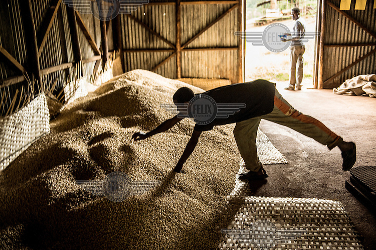Farmer labourers sort coffee beans at a small farm in the village of Konga. /Felix Features