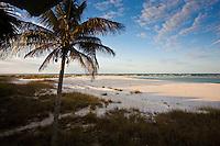 Idyllic shoreline and sandy beach scene with coconut palm tree at Anna Maria Island, Florida, United States of America