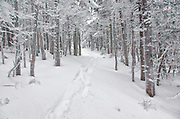 Winter Forest Scenes