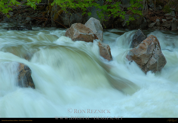 Lower Tenaya Creek at Dawn during Spring Flood, Yosemite National Park