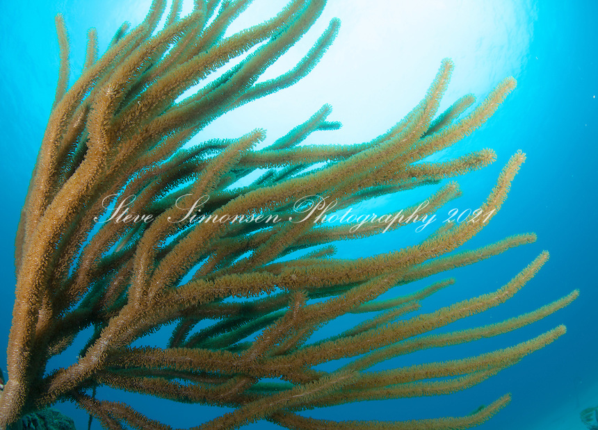 Sea Rods<br />