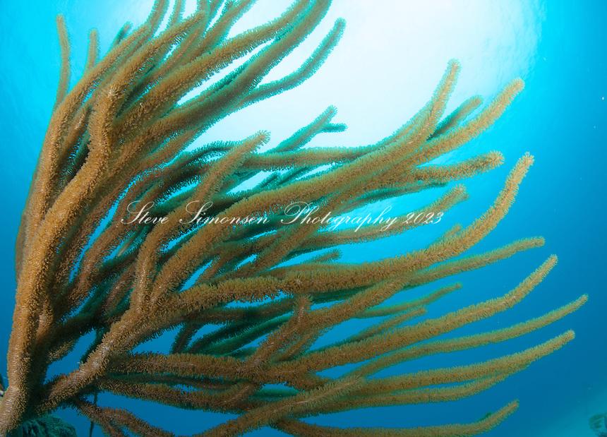 Sea Rods<br /> Virgin Islands