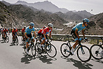 Zhandos Bizhigitov (KAZ) and race leader Alexey Lutsenko (KAZ) Astana Pro Team during Stage 5 of the 10th Tour of Oman 2019, running 152km from Samayil to Jabal Al Akhdhar (Green Mountain), Oman. 20th February 2019.<br /> Picture: ASO/P. Ballet | Cyclefile<br /> All photos usage must carry mandatory copyright credit (&copy; Cyclefile | ASO/P. Ballet)