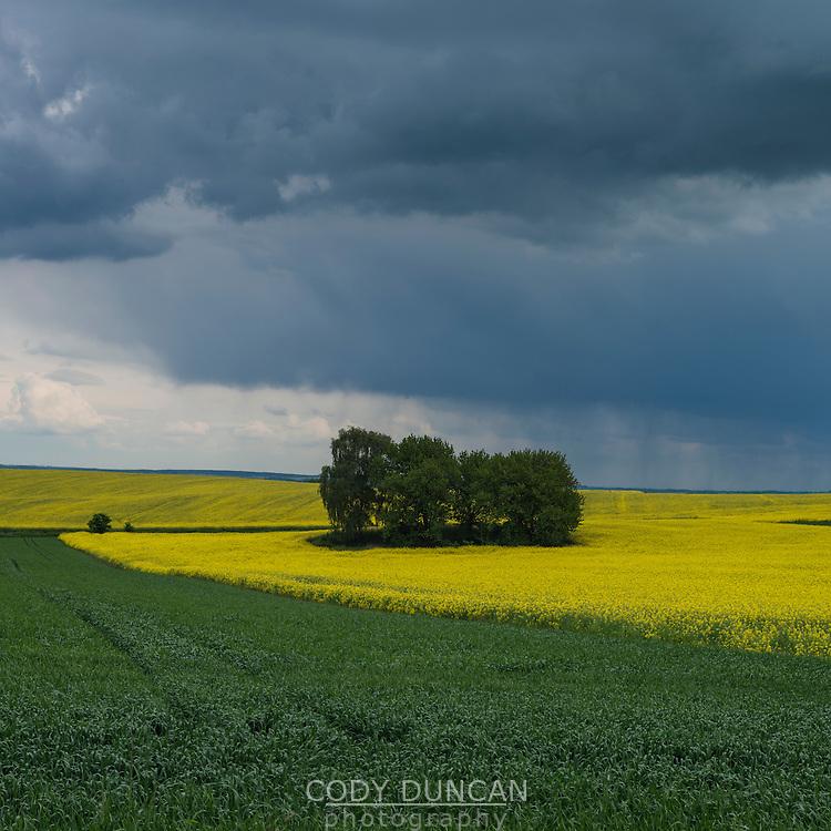 Spring thunderstom over Rapeseed field, Prudnik County, Opole Voivodship, Silesia, Poland