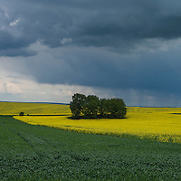 Spring thunderstom over Rapeseed field, Prudnik County, Opole Voivodship, Silesia, Poland
