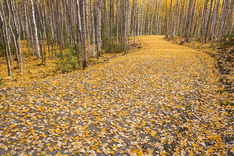 Autumn leaves on roadway in Fairbanks, Alaska