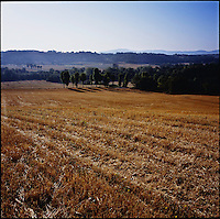 A field in morning sunlight in Saline di Volterra, Tuscany in Italy in the summer of 2007.