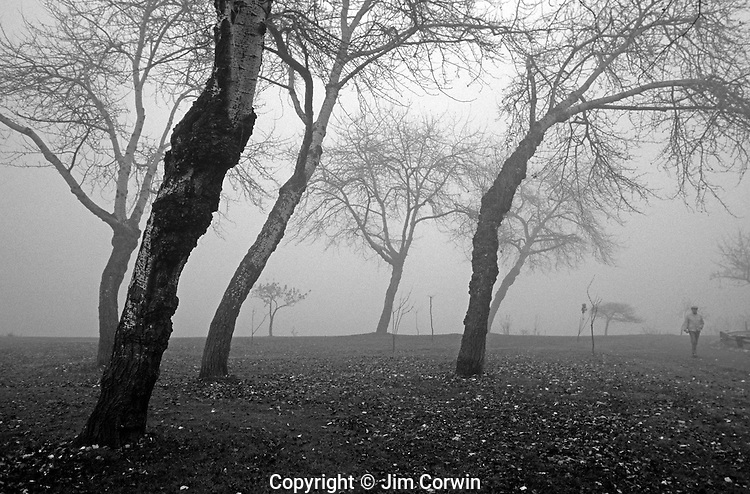Sunrise in fog with man walking along path with trees losing their leaves in Autumn