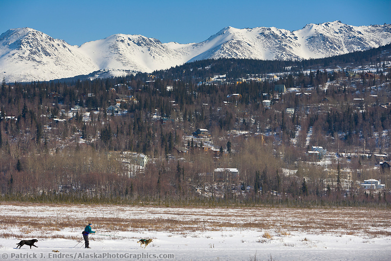 Man skijours with dogs through Potter Marsh, Anchorage, Alaska.