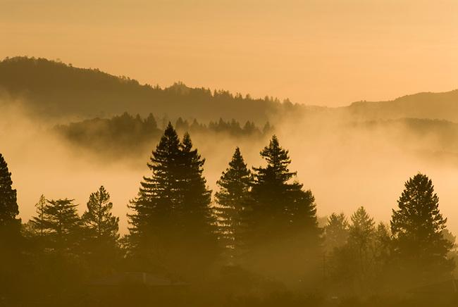 Sunrise fog over St. Helena and Napa Valley