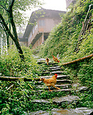 CHINA, Longsheng, hens walking on steps at the Dragon Backbone Rice Terraces