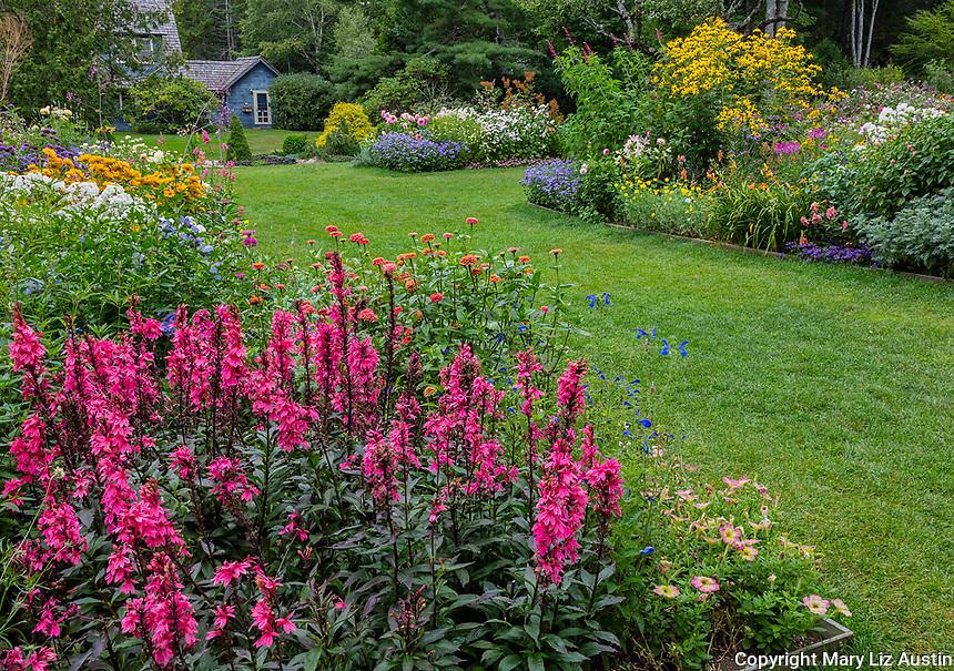 Northeast Harbor, Maine: Thuya Garden in summer. Featuring lobelia 'fan salmon', white flowering phlox, zinnias, veronica, rudbeckia, dahlias and salvia
