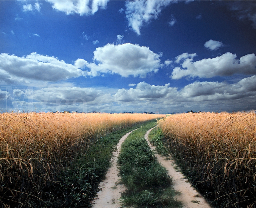 Field with cloud